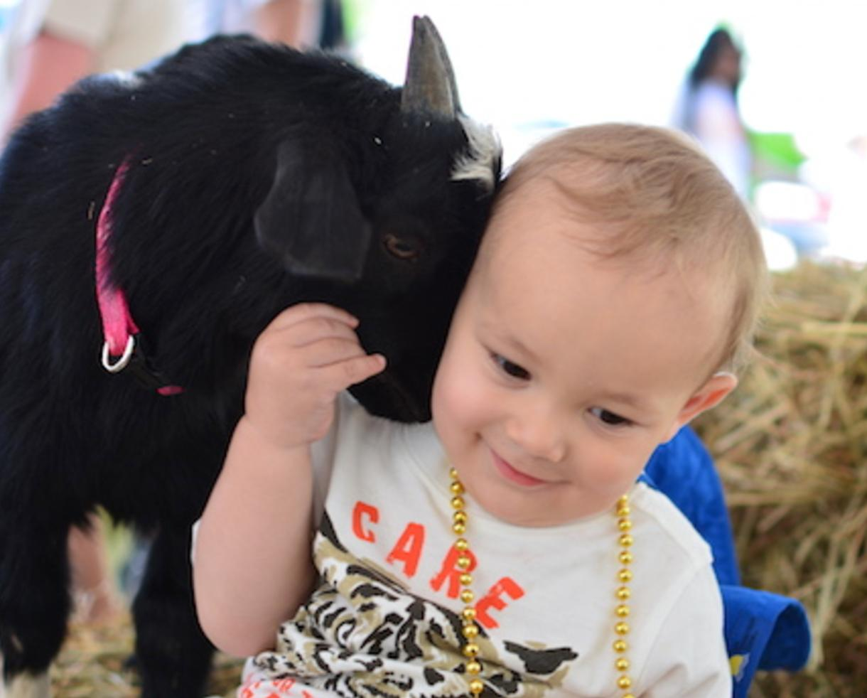 $199 for Choice of Indoor Zoo-To-You Package from The Leesburg Animal Park ($329 Value - 40% Off)