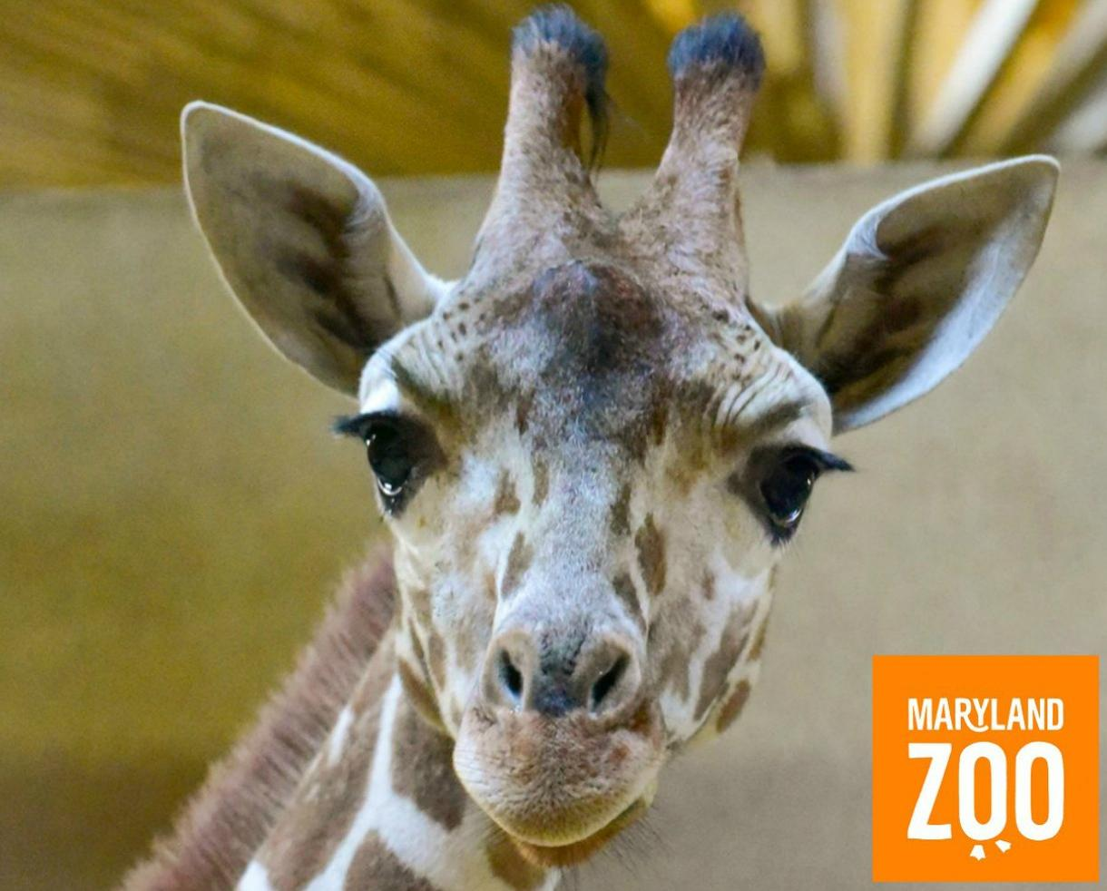 Purchase a Maryland Zoo Membership and Get 2 Additional Months FREE!