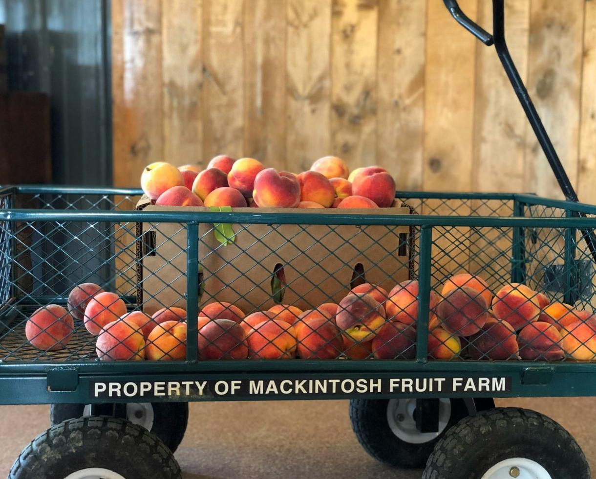 THIS WEEKEND ONLY! Two Pecks of Pick-Your-Own Peaches at Mackintosh Fruit Farm