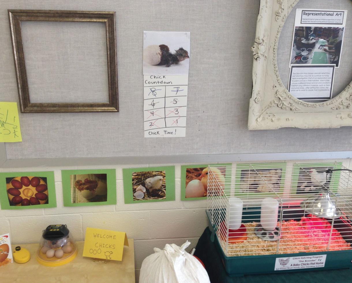 NJ/NY/PA 4 Week Chick Hatching Rental from RentACoop