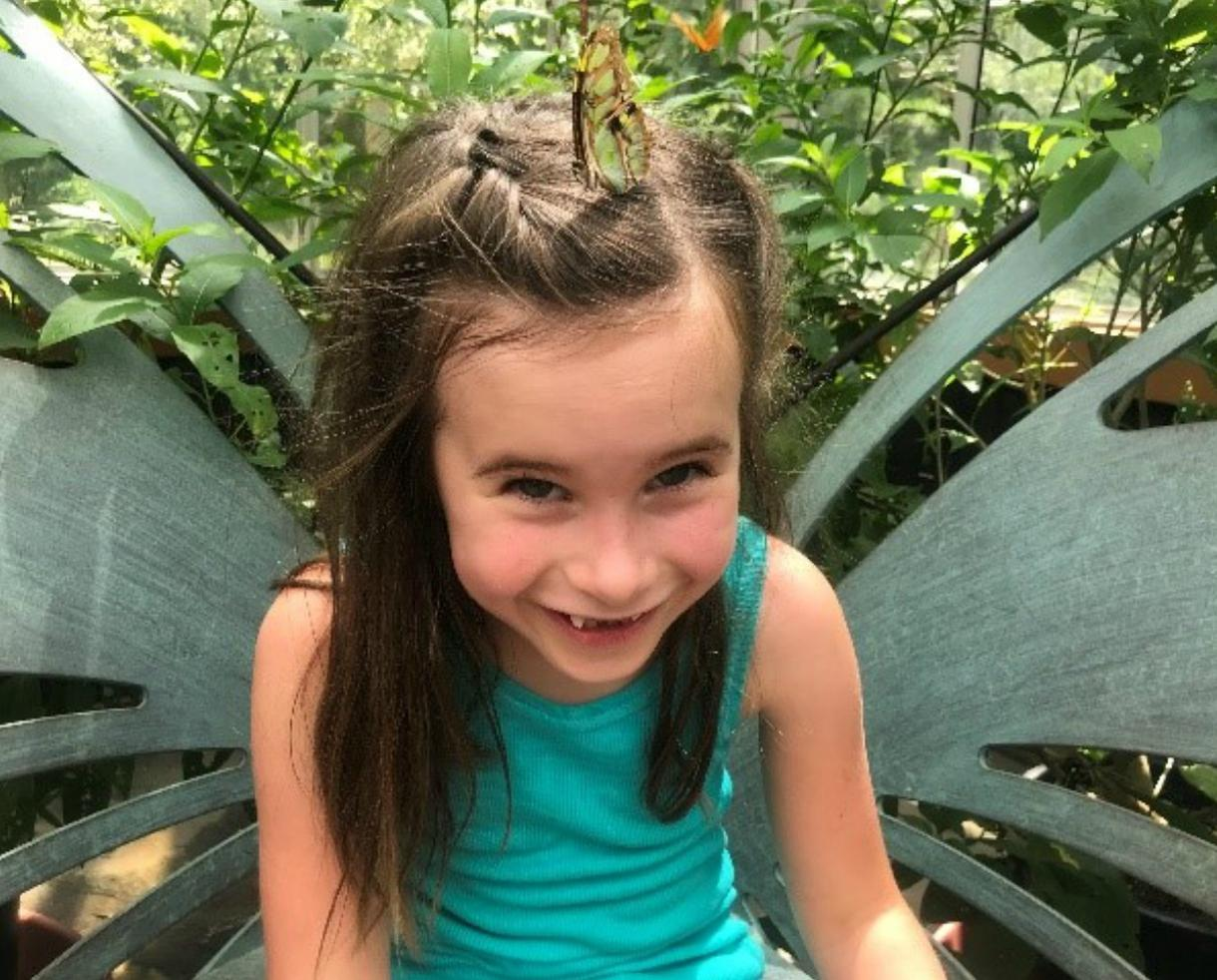 Wings of Fancy Butterfly & Caterpillar Exhibit at Brookside Gardens