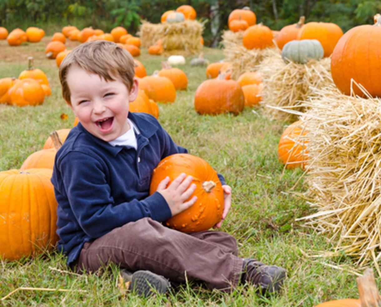 $10+ for Pumpkin Patch Package at TLV Tree Farm in Glenelg (Up to 50% Off)