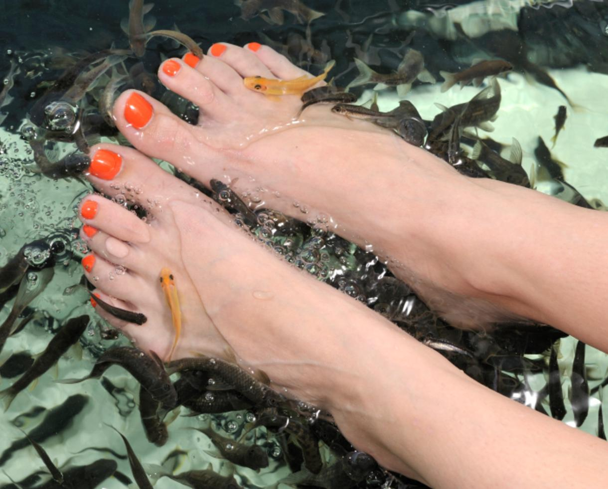 20 minute fish therapy session regular manicure and for Fish pedicure nyc
