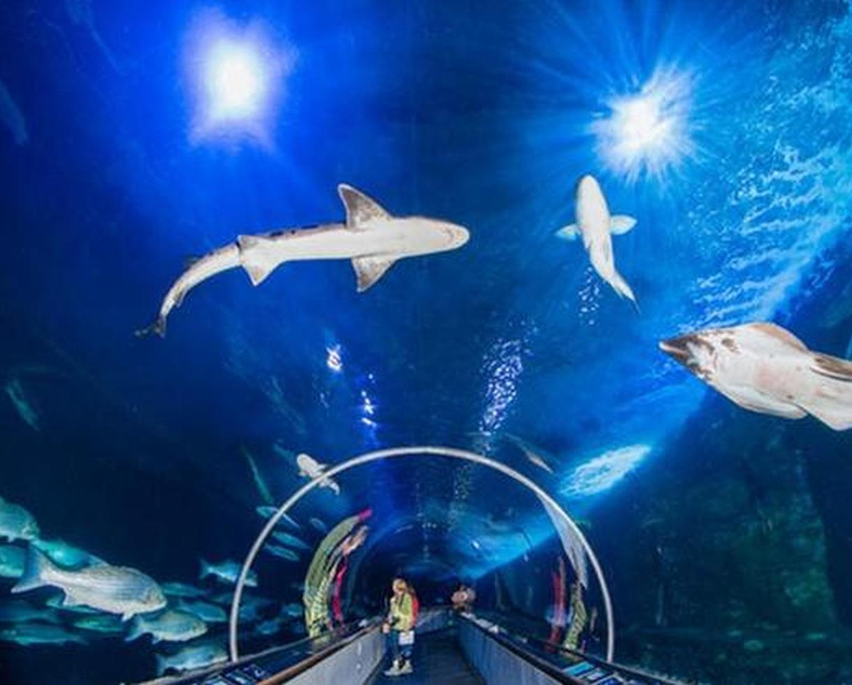 Aquarium of the Bay Admission