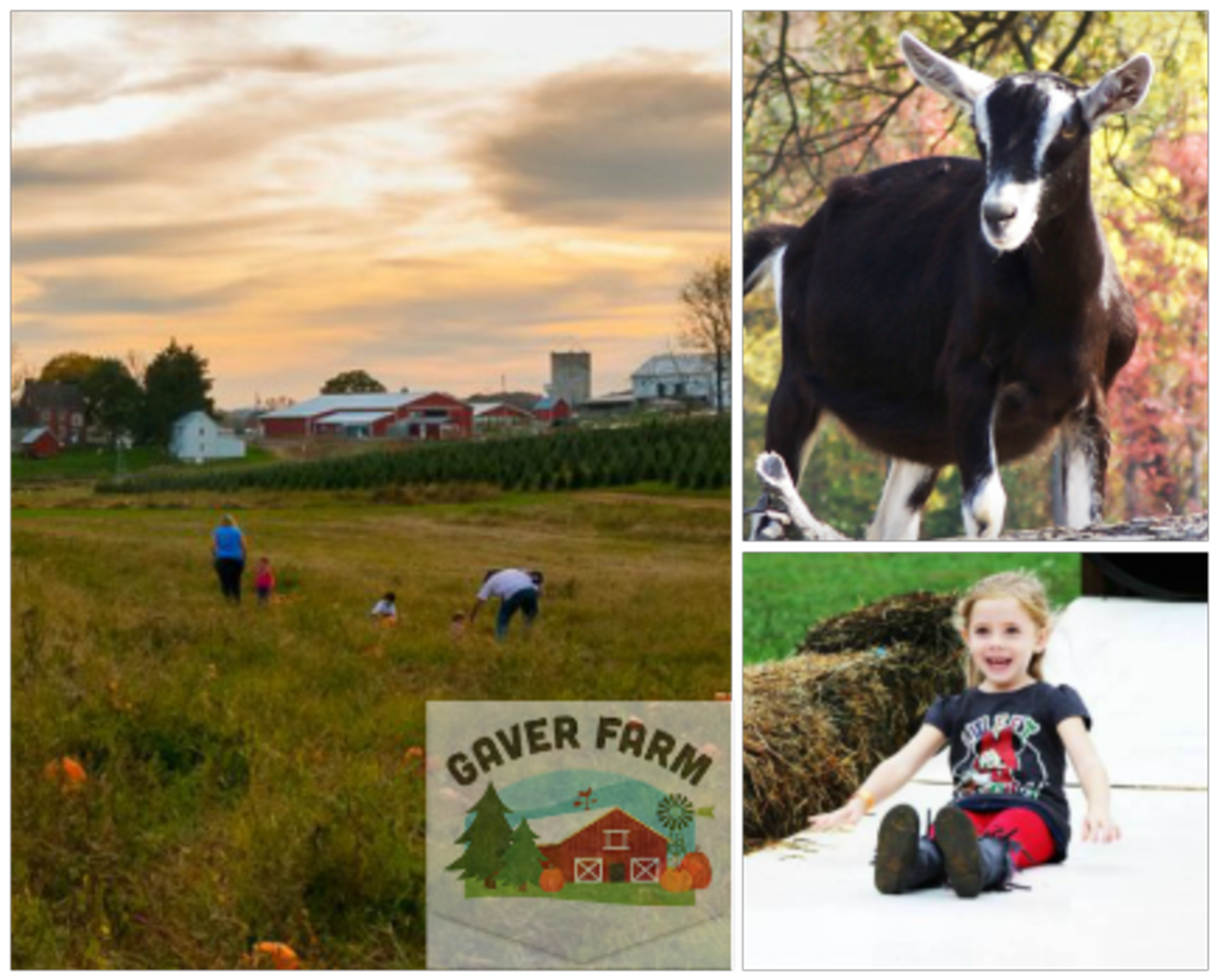Heritage Owings Mills >> Deal: $10 for TWO Weekend Admissions to Gaver Farm in Mt. Airy, MD ($19 Value - 48% Off ...