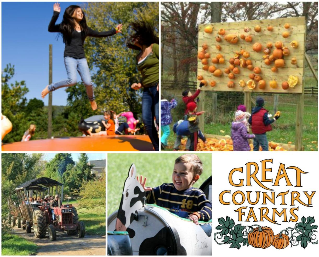 $5 for Great Country Farms Admission - November 1st - 20th - PUMPKIN SMASHING! (50% Off)