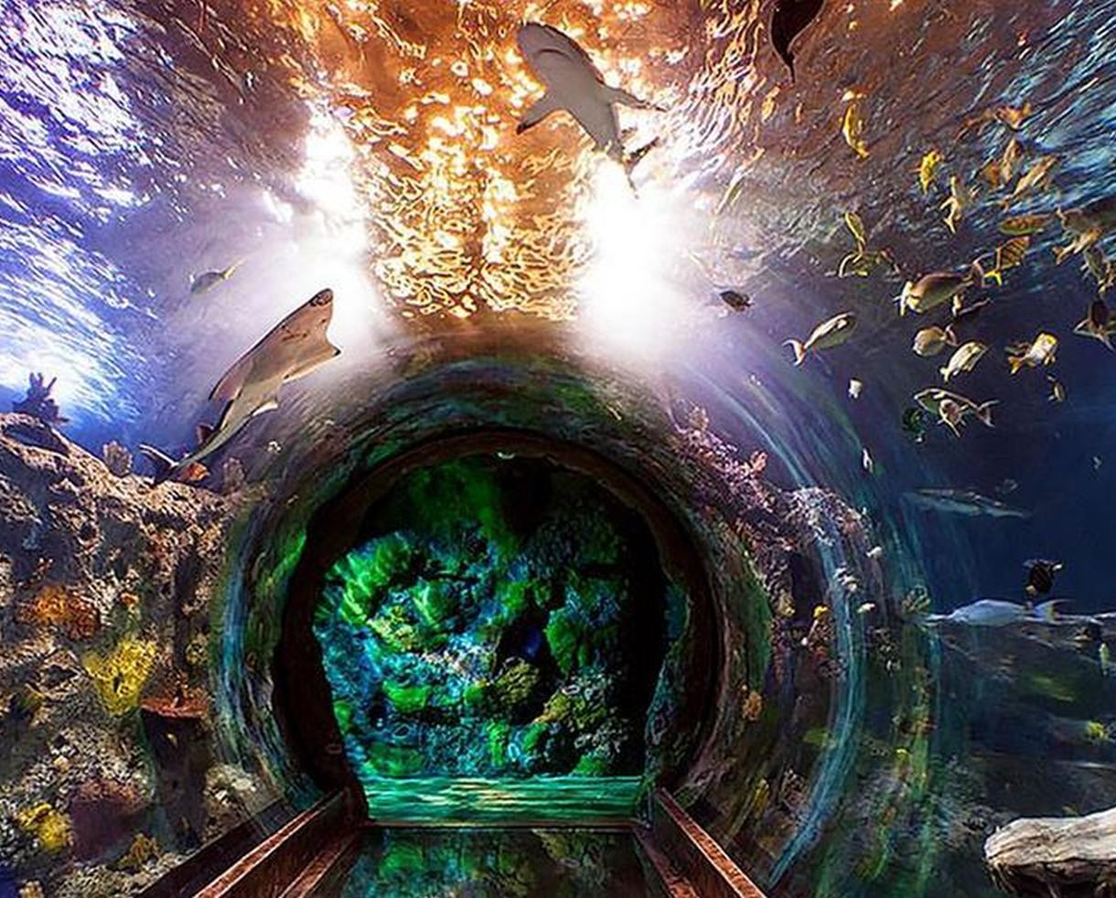 SEA LIFE Grapevine Aquarium Admission