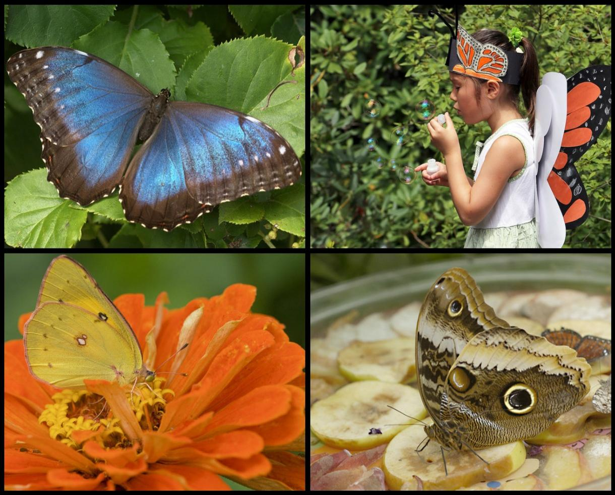 $8 for TWO Admissions to Wings of Fancy Butterfly & Caterpillar Exhibit - Brookside Gardens in Wheaton ($16 Value - Up to 50% Off)
