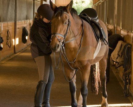 $75 for a Full Day School Holiday Equestrian Camp (25% off) OR $375 for Horse Lover's Birthday Party (43% off) from Camp Koda at The Academy of Equestrian Sciences