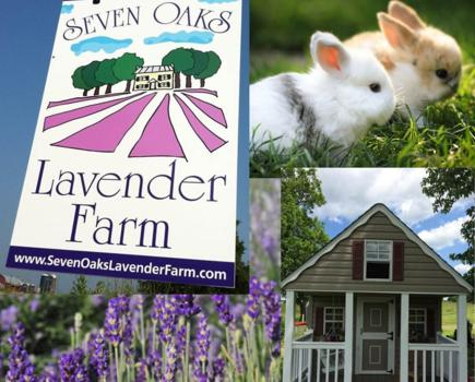 $14 for Seven Oaks Lavender Farm Family Four-Pack of Admissions (49% Off!)