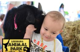 $12 for 1 Adult & 1 Child Summer Ticket to Leesburg Animal Park (46% Off - $22 Value)