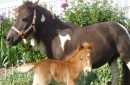 $20 for 2 Admissions to Land of Little Horses Farm Park (38% Off)