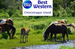 $149 for 2-Night Chincoteague Island, VA Escape with Hot Breakfast Daily - Valid through November! (Up to 43% Off)