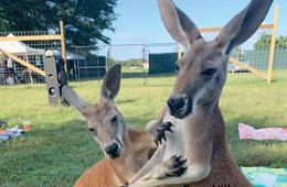 Animal Show + Kangaroo Walkabout Encounter @ Barn Hill Preserve of Delaware