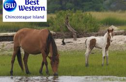 $115+ for 2-Night Chincoteague Island, VA Escape with Hot Breakfast Daily - Valid through JUNE! (Up to 39% Off)