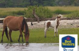 $195 for 2-Night Chincoteague Island, VA Escape with Hot Breakfast Daily (Up to 43% Off)