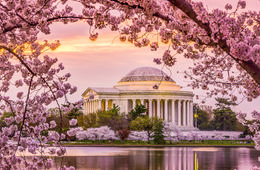 Capitol River Cruise Cherry Blossom Sightseeing Tour