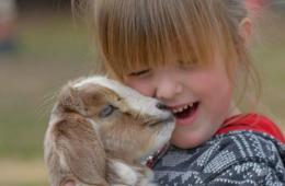 Snuggle Time with Baby Goats at Prosperity Acres Farm