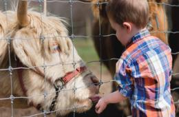 $14 for TWO Summer Tickets to Green Meadows Petting Farm - Frederick (42% Off)