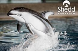 10% Off Annual Membership to Shedd Aquarium - Chicago
