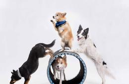 Mutts Gone Nuts at Gordon Center for Performing Arts