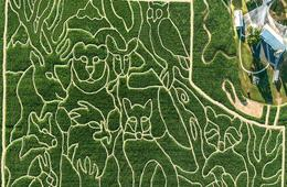 Child Corn Maze Admission at Oregon Dairy