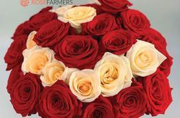 50% Off of 2 Dozen Long Stem Roses + FREE Shipping