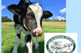 South Mountain Creamery Dairy Farm Tour + Handcrafted Ice Cream