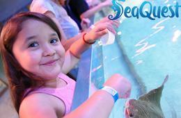 CertifiKID Exclusive! SeaQuest Annual Passport + 6 Feeding Tokens