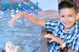 SeaQuest Weekday Admission Tickets or Ultimate Experience Package