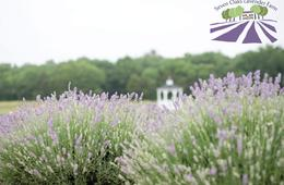 Seven Oaks Lavender Farm Admission
