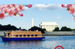 $16 for Boomerang Cherry Blossom Cruise - Georgetown Waterfront (50% Off!)