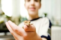 $165 for One Hour Animal Presentation with 6 - 8 LIVE Animals for Up to 15 Guests from Dorsey's Fangs, Frogs and More! ($245 Value)