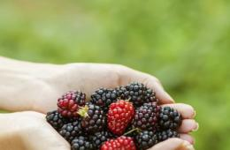 $5 for Great Country Farms - Summer Admission & Berry Picking! (60% Off!)
