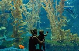 Birch Aquarium Admission for One Child, Senior, or Adult