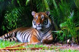 Palm Beach Zoo & Conservation Society General Admission