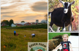 $10 for TWO Weekend Admissions to Gaver Farm in Mt. Airy, MD ($19 Value - 48% Off)