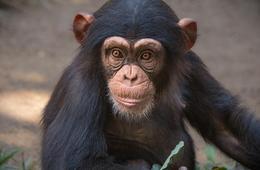Los Angeles Zoo Individual or Family Membership