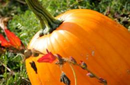 $7 for Sharp's Farm Fun for 2 + Hayride, Pick Your Own Pumpkins and Popcorn! Brookeville, MD (47% Off)