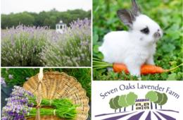 $13 for Seven Oaks Lavender Farm Family Four-Pack of Admissions + 40 Stem Pick-Your-Own Bouquet (50% Off)