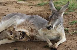 Safari Adventure at Sharkarosa Wildlife Ranch