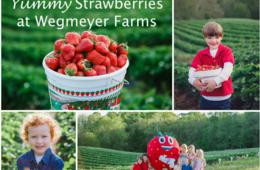 $15 for Weekday U-Pick Strawberries at Wegmeyer Farms - 4 Quart Bucket of Fresh Berries! - Loudoun County (32% Off)