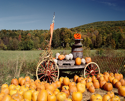 Texas Pumpkin Patches, Corn Mazes, Hayrides and