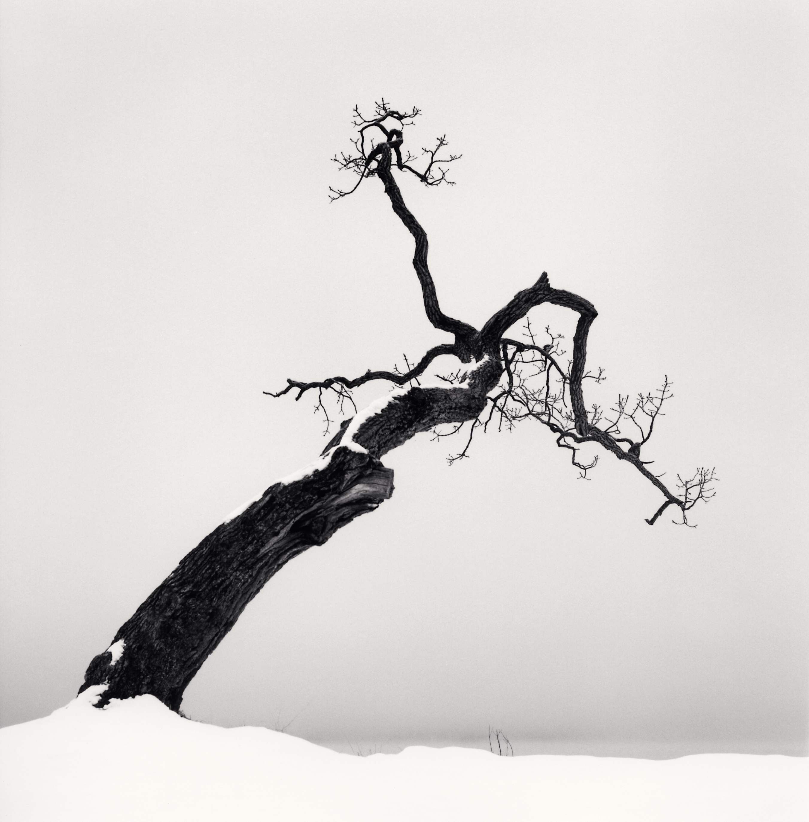 Michael Kenna Kussharo lake tree