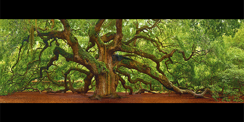 "Charitybuzz: liveBID! Limited Edition ""Tree of Hope"" Print by Peter Lik - Lot 216519"