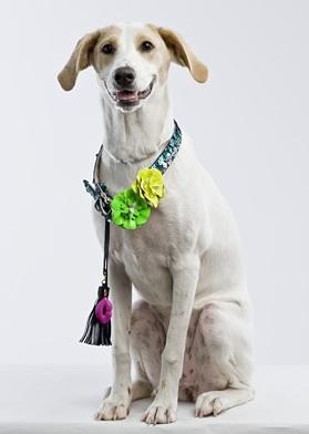 Charitybuzz Betsey Johnson Designer Dog Collar Lot 105953