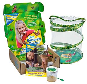 Live Butterfly Growing Kit