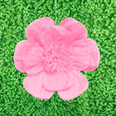 """20"""" TISSUE SCALLOP FLOWERS-PC (Pink)"""