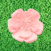 "20"" TISSUE SCALLOP FLOWERS-PC (Blush)"