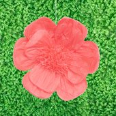 """20"""" TISSUE SCALLOP FLOWERS-PC (Coral)"""